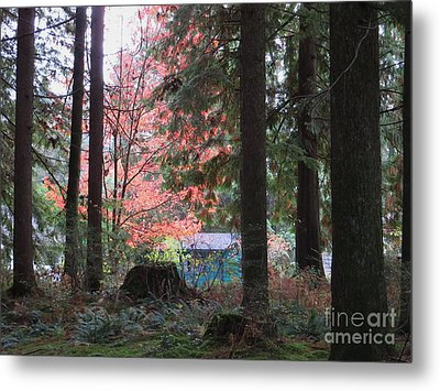 Beauty Through The Trees Metal Print