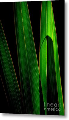 Metal Print featuring the photograph  Black And Green by Michelle Meenawong