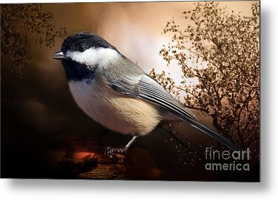 Black Capped Chickadee Metal Print by Elaine Manley