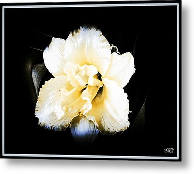 Daylily Metal Print by Michelle Frizzell-Thompson