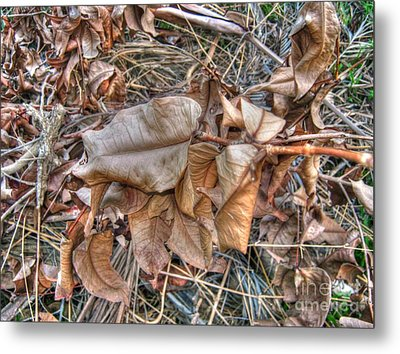 Metal Print featuring the photograph  Dead Leaves by Michelle Meenawong