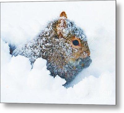 Deep Snow Squirrel Metal Print