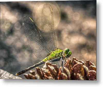Metal Print featuring the photograph  Erythemis Simplicicollis by Rob Sellers
