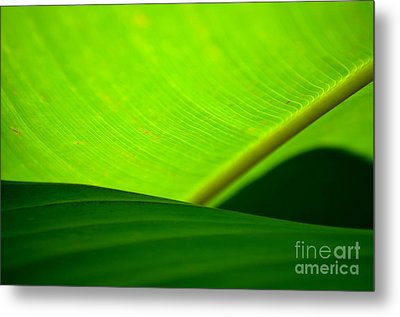 Metal Print featuring the photograph  Greens by Michelle Meenawong