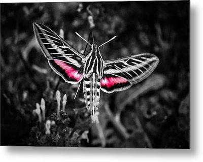 Hummingbird Moth Bw Print Metal Print by Doug Long