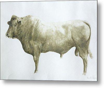 Islay Bull Metal Print by Lincoln Seligman
