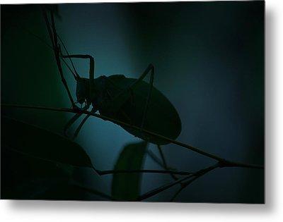 It's A Bug... Metal Print by Tammy Schneider