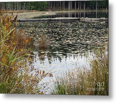 Lily Pads On Whonnock Lake Metal Print