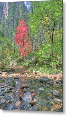 Metal Print featuring the photograph  Lone Maple Fall Creek by Harold Rau