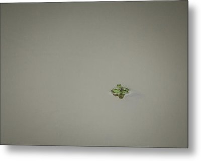 Lonely Frog Metal Print