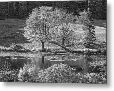 Long Pond On Mount Desert Island In Maine Metal Print by Keith Webber Jr