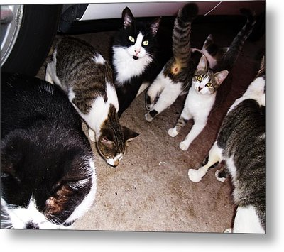 Mama Cat And Kittens Metal Print by Trudy Brodkin Storace