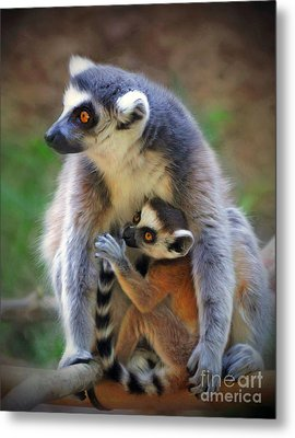 Metal Print featuring the photograph    Mother And Baby Monkey by Savannah Gibbs