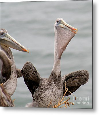 Metal Print featuring the photograph  My Fish by Bob and Jan Shriner
