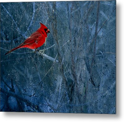Northern Cardinal Metal Print by Thomas Young