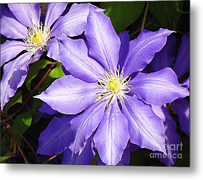 Pretty Purple Clematis Metal Print