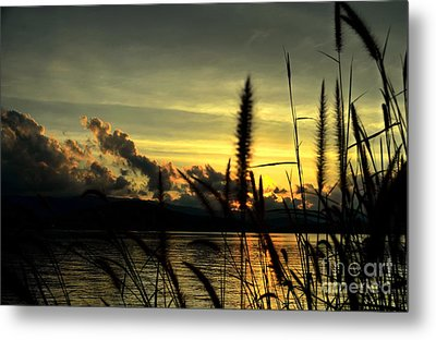 Sunset Metal Print by Michelle Meenawong