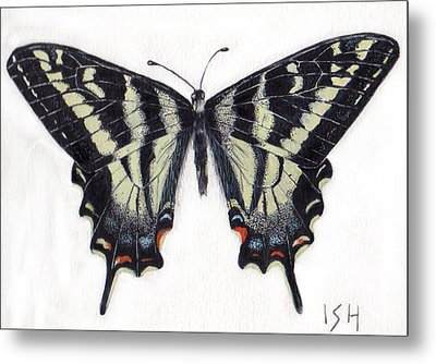 Swallowtail Butterfly  Metal Print by Inger Hutton