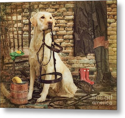 Tack Cleaning Day Metal Print by Trudi Simmonds