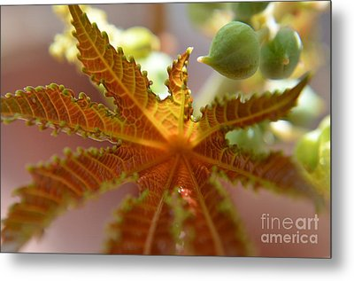 Metal Print featuring the photograph  Transparency by Michelle Meenawong