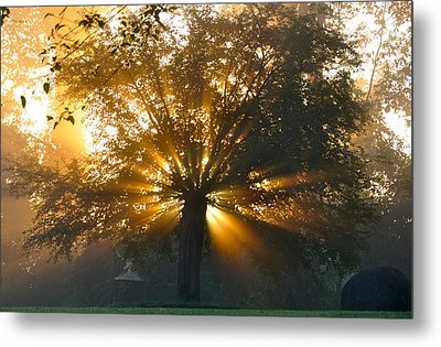 Tree Burst Metal Print by David Flitman