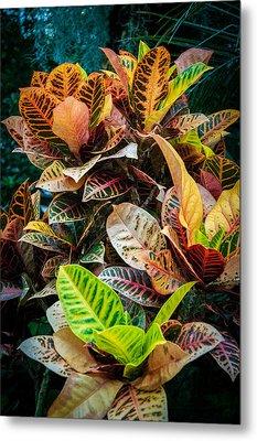 Variegated Plants Metal Print