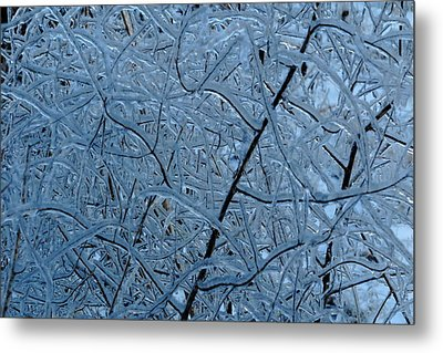 Vegetation After Ice Storm  Metal Print