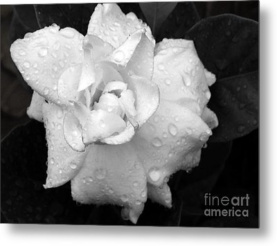 Metal Print featuring the photograph  White Drops by Michelle Meenawong