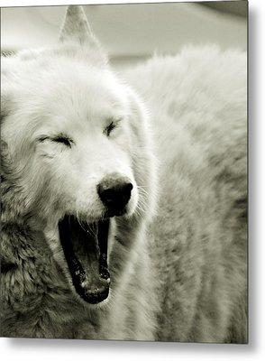 Yawning Metal Print by Chastity Hoff