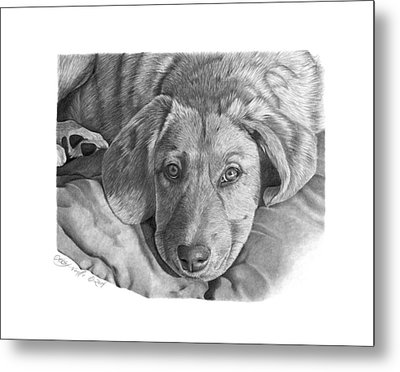 Metal Print featuring the drawing 033 - Molly by Abbey Noelle