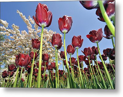 Metal Print featuring the photograph 090416p029 by Arterra Picture Library