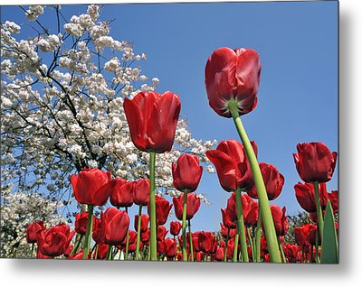 Metal Print featuring the photograph 090416p031 by Arterra Picture Library