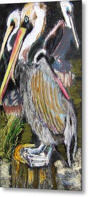 090914 Pelicans Metal Print by Garland Oldham