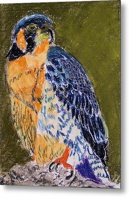 092914 Paragon Falcon Metal Print by Garland Oldham