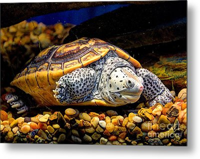Sea Turtle Metal Print by Savannah Gibbs