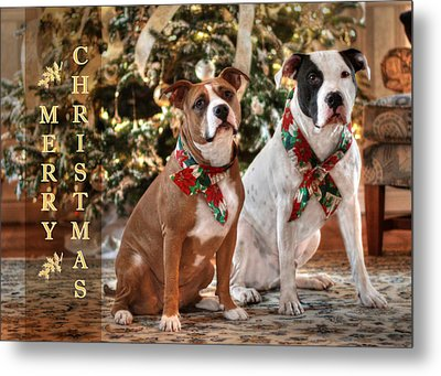 A Bubba And Kensie Christmas Metal Print by Shelley Neff