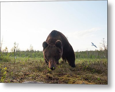 A Close Up Wide Angle Picture Metal Print by Sergio Pitamitz