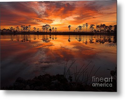 A New Day Dawning Metal Print by Jane Axman