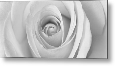 Metal Print featuring the photograph A Rose Is A Rose Is... by Silke Brubaker