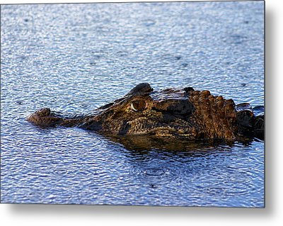 Metal Print featuring the photograph Amazon Alligator by Henry Kowalski
