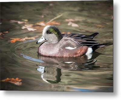Metal Print featuring the photograph American Wigeon by Tyson and Kathy Smith