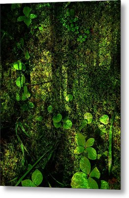 An Earthy Place Metal Print by Shirley Sirois