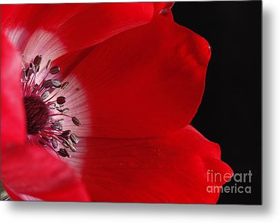 Metal Print featuring the photograph Anemone by Rebeka Dove