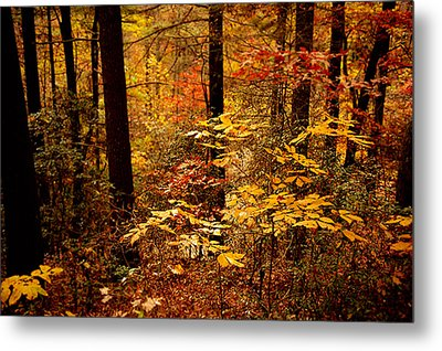 Appalachian Fall Metal Print by Phyllis Peterson