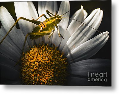 Australian Grasshopper On Flowers. Spring Concept Metal Print by Jorgo Photography - Wall Art Gallery