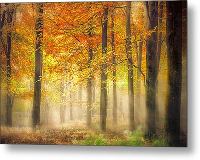 Autumn Gold Metal Print by Ian Hufton