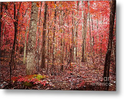 Autumn Landscape Metal Print by Kim Fearheiley
