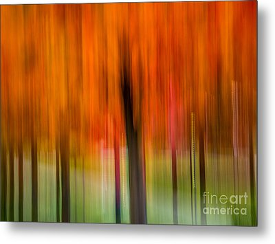 Autumn Park 2 Metal Print by Susan Cole Kelly Impressions