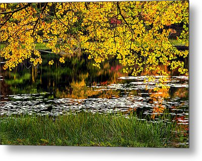 Autumn Pond 2013 Metal Print by Bill Wakeley