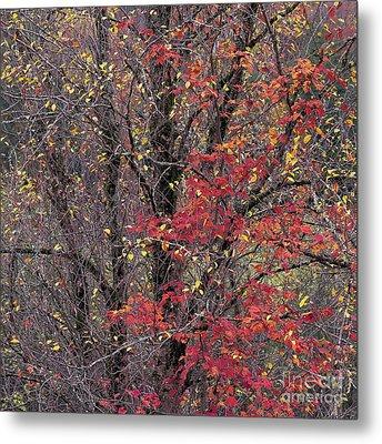 Metal Print featuring the photograph Autumn's Palette by Alan L Graham